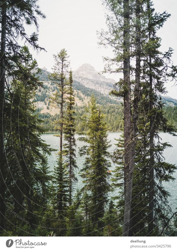 Conifers in front of a lake, in the background a mountain top Wellness Rock Time to yourself Expedition Break Camping Earth Climate change Harmonious Contrast
