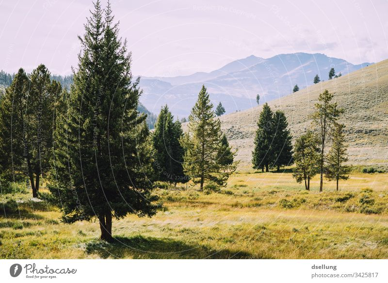 Single coniferous trees in front of a mountain panorama Plant National Park Life USA Coniferous trees Tree Hill Beautiful Hiking Tourism Climate Peak Clouds