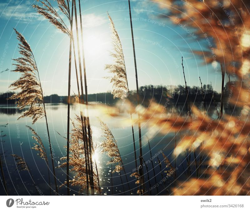 Into The Mystic Lake Reeds Sun Illuminate rays Nature out Mysterious Exterior shot Colour photo Back-light Deserted Idyll Contrast Water Shadow windless Calm