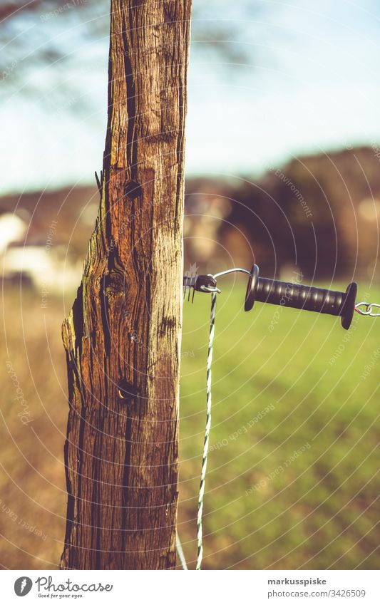 Paddock electric fence paddock Electrified fence Fence Boundary Willow tree horses cows Pasture fence