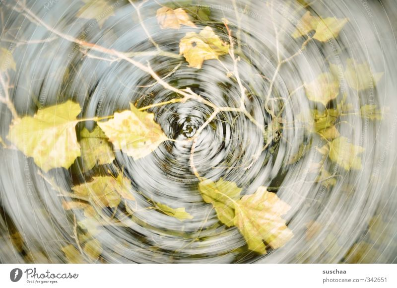 my autumn Work of art Environment Nature Air Autumn Climate change Wind Tree Leaf Beautiful Gloomy Gray Green Dynamics Rotate Movement Double exposure Branch