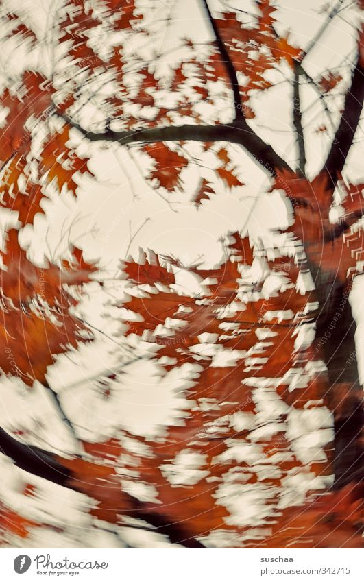 Yes, it's autumn already? Nature Plant Air Sky Autumn Wind Gale Tree Leaf Wood Red Creativity Political movements Dynamics Branch Rotate Above Colour photo