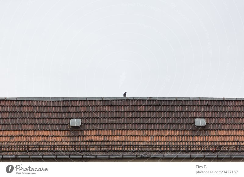 a dove on the roof Berlin Schönhauser Allee Pigeon Prenzlauer Berg Roof Old building Roof hatch Town Exterior shot Deserted Old town Capital city Downtown