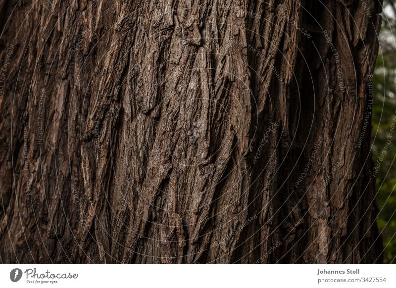 Coarse tree bark in close-up Tree Wood forest trunk Tree trunk Forest Forester Park Nature Bark-beetle strength Climate protection Climate change climate crisis