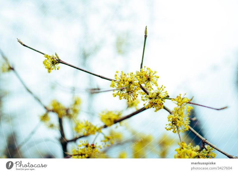 spring awakening Spring Spring flower Spring colours Flower Blossom Yellow Branch Blossoming blossom