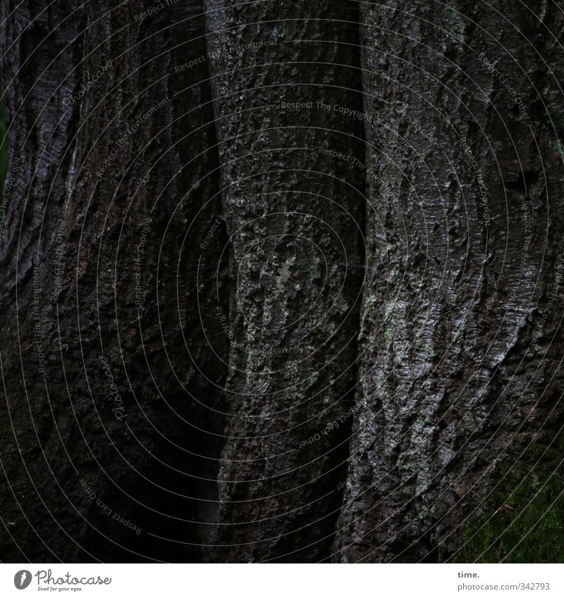 Nature Plant Tree Calm Forest Environment Dark Dye Dream Moody Power Authentic Protection Infinity Serene Tree trunk
