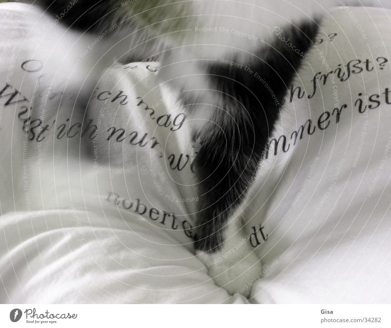White Black Cat Characters Living or residing Pelt Paw Text Cushion Bolster Poem Verse