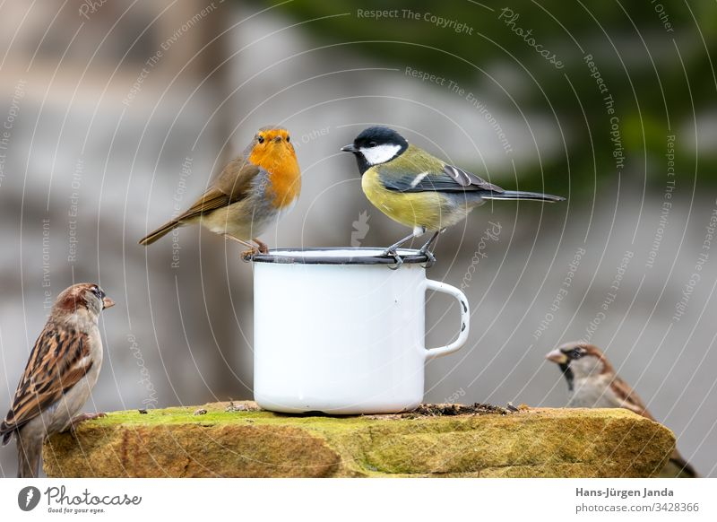 Two birds sitting on the edge of a metal cup in front of a blurred background Table Bird Tit mouse Mug Garden Eating Food Feed feed Wild Green Beautiful Cute
