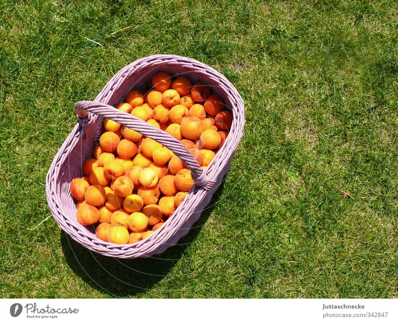 Summer, come on! Food Fruit Apricot Nutrition Picnic Organic produce Vegetarian diet Healthy Eating Life Grass Basket Fresh Delicious Round Juicy Sweet Green