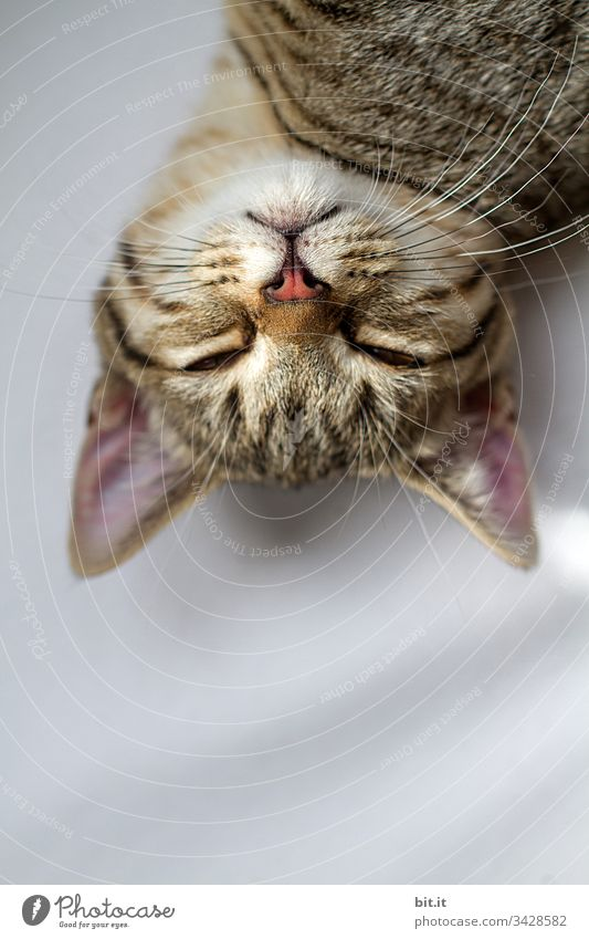 The world is upside down, dreams the young tiger cat and sinks into a deep sleep. Cat Tabby cat Pet Sleep Animal Animal portrait Animal face Close-up
