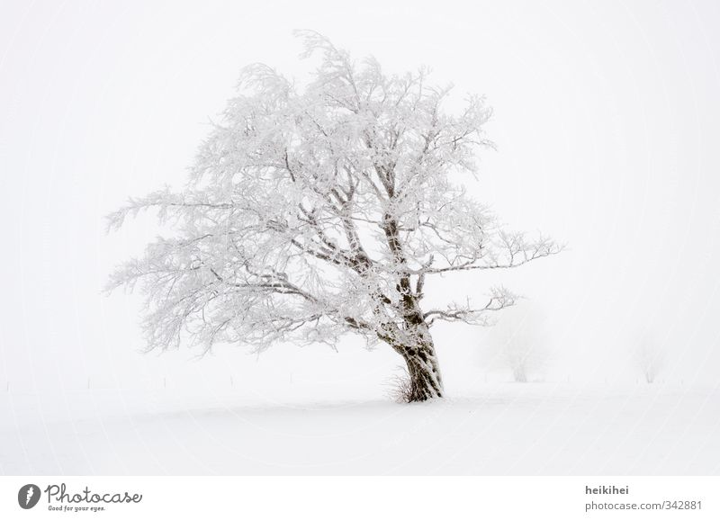 winter wonderland Vacation & Travel Winter Snow Winter vacation Nature Landscape Weather Fog Tree Mountain Cold Beautiful Brown White Loneliness Subdued colour