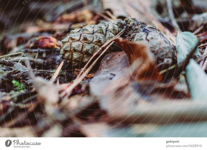 it's getting late foliage Forest forest soils Fir cone Nature Autumn Environment Close-up Shallow depth of field Detail Brown Deserted Plant Colour photo
