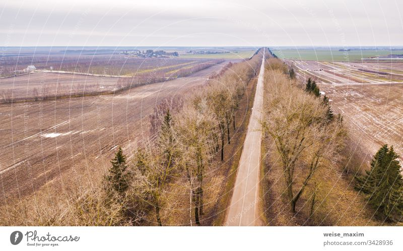 Straight road in alley of dry trees without leaves in winter / early spring aerial view Road way straight farm rural garden fields countryside clear branch cold