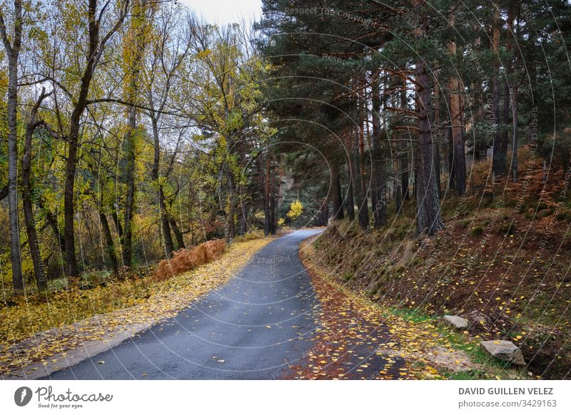 Forest trail in autumn Yellow Red Contrast Field ocher Leaf Autumn pathway Fallen Rain Nature Safety Overcome Light confidence Plant Lost Loneliness rainforest