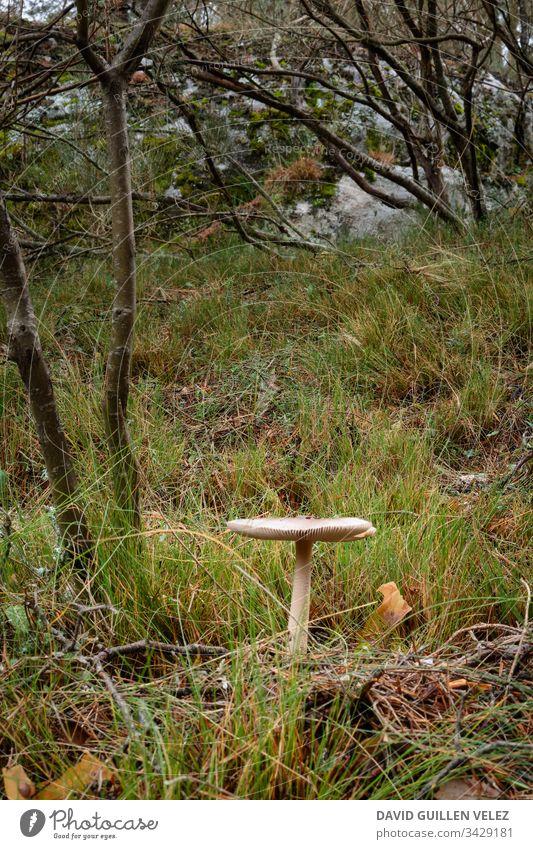 Medium white mushroom in the forest Forest Tracks pathway Autumn Rain rainforest Mushroom fungus Contrast Green White Field tree ocher Nature Overcome