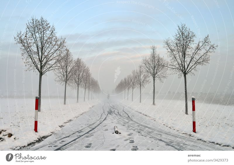 Alley with snow and bicycle lanes Winter Tree Avenue Snow Ice Sky Bicycle Tracks Landscape Nature chill Frost Blue White