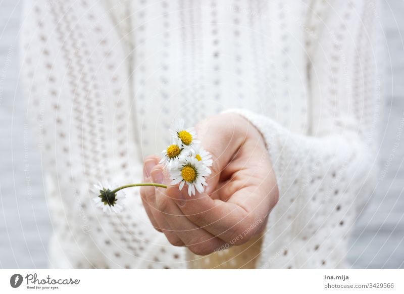 Flowers for you! flowers Daisy daisies White Yellow bleed Bouquet Mother's Day Valentine's Day Plant already spring Early spring Nature Neutral Birthday natural