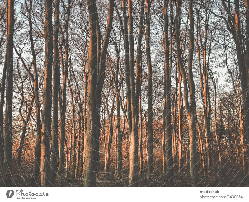 in the wood Forest trees tree trunks Nature Environment Deserted Tree Plant Wood Tree trunk Relaxation Recreation area Calm Exterior shot Light Sunlight