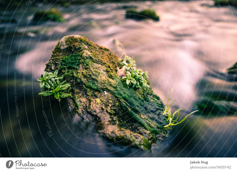 Stone overgrown with flowers in the current of a river rock Water Flow River Lake Surf Body of water Current smooth water surface Waterfall Flower Plant