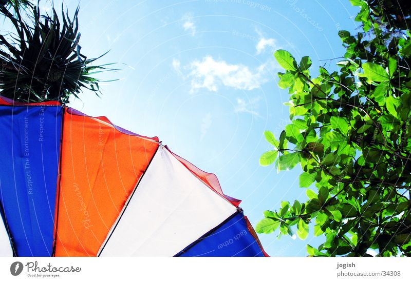 Looking up Clouds Tree Palm tree Sunshade Tricolour Green White Red Leaf Vacation & Travel Thailand Sky Blue