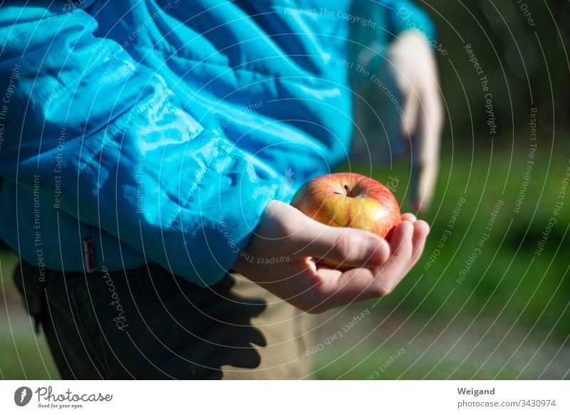 apple Apple Picnic Child Hiking fruit Healthy Eating Colour photo Vegetarian diet Organic produce Nutrition Exterior shot Fruit Food Fresh Day
