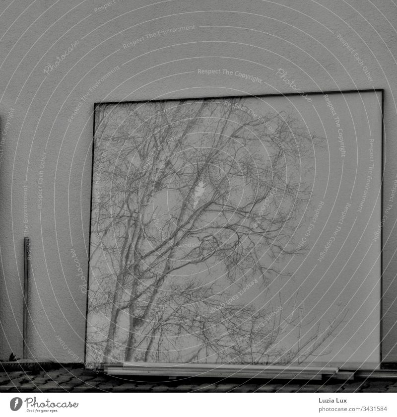 Reflection of branches, window pane and a broom Branchage Broom black-and-white Sweep Exterior shot Deserted reflection Pane Mirror Bleak Day Wall (building)