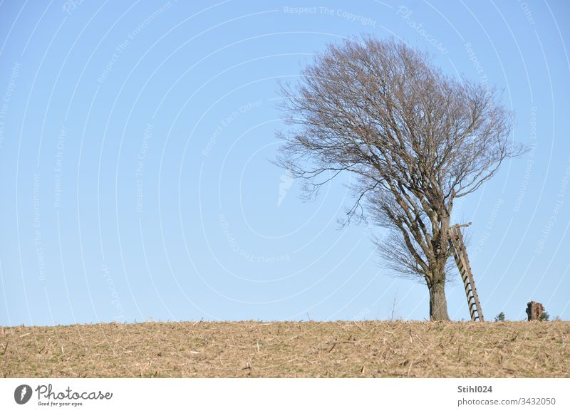 High seat with sloping ladder leaning against a sloping tree Hunting Blind Winter free hunter's seat Deciduous tree hide Horizon acre Field topsoil Blue