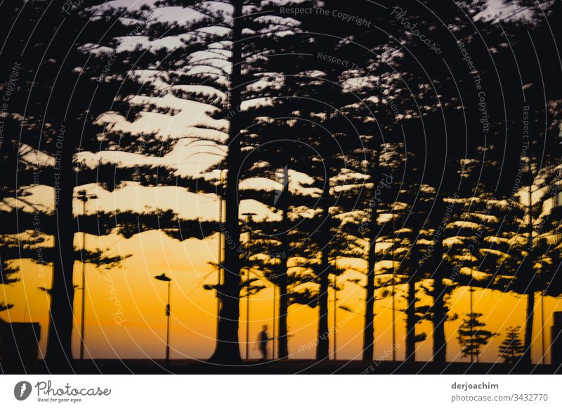 Jogging in the evening near the beach. One person as shadow under trees with golden evening sky. Sunset daylight Colour Copy Space top Colour photo