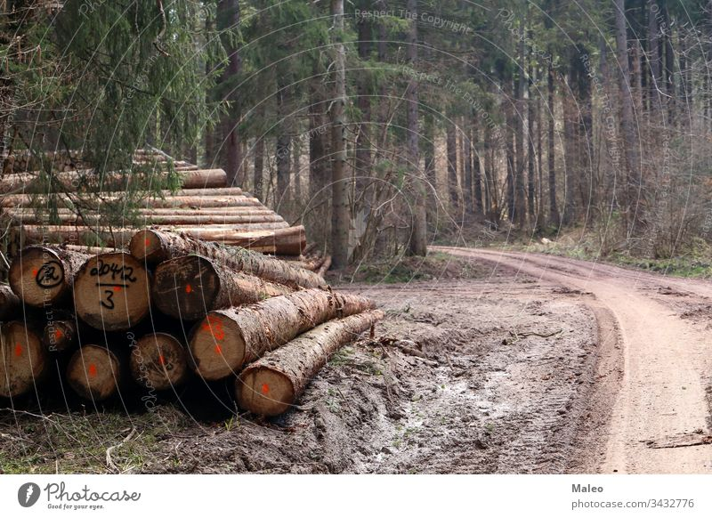 Freshly cut trees in the forest, on the side of a forest road deforestation environmental forestry industry landscape log logging lumber nature pile stack