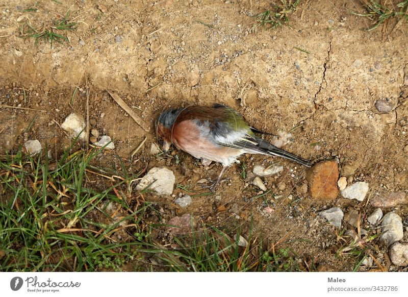 Close-up of a dead songbird in the ground animal nature wild wildlife horizontal photography avian male tree wing background color ecology environment forest
