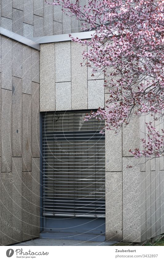 Pink cherry blossoms in spring in front of a grey facade of granite slabs and a floor-to-ceiling window covered by a louvre blind Facade Granite Spring Gray