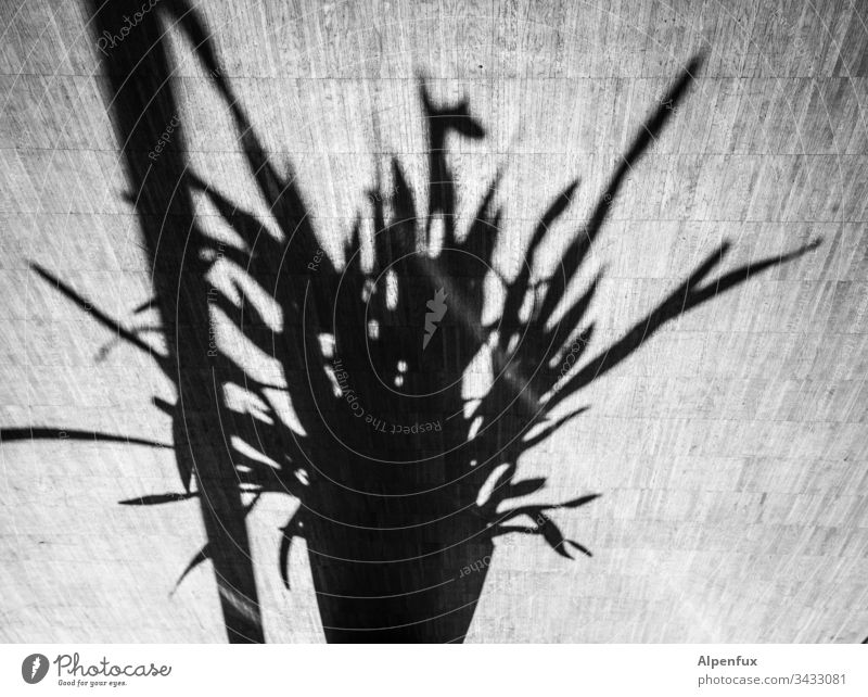 pole dancing Shadow Plant Light Flower Deserted Contrast Day leaves Flowerpot Sunlight Decoration Pot plant Foliage plant Living or residing Flat (apartment)