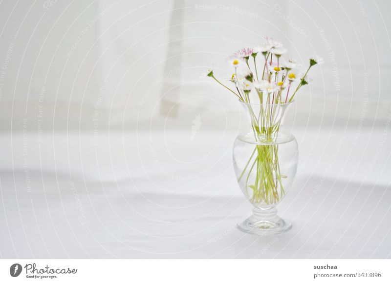 daisies in glass vase / cautious optimism Daisy flowers Blossom stalk Vase Bright flooded with light tablecloth Drape White bright background Copy Space