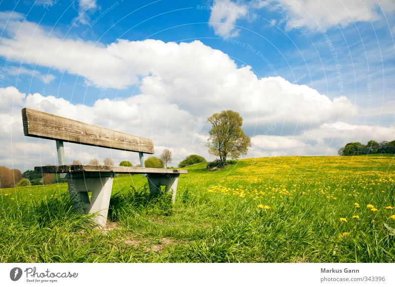 bank in the green Relaxation Summer Nature Landscape Flower Grass Foliage plant Meadow Blue Yellow Green Leisure and hobbies Clouds Bench Dandelion Calm Warmth