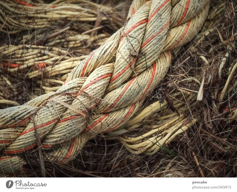 Red Business Authentic Rope Round Strong Attachment Navigation North Sea Society Dew Sewing thread Knot Muscular Honest Low tide