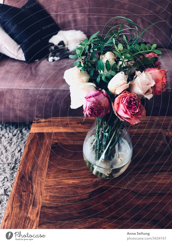 Withered flowers on a wooden table with sleeping cat in the background Abstract Still Life Colour photo Deserted Interior shot Detail Super Still Life