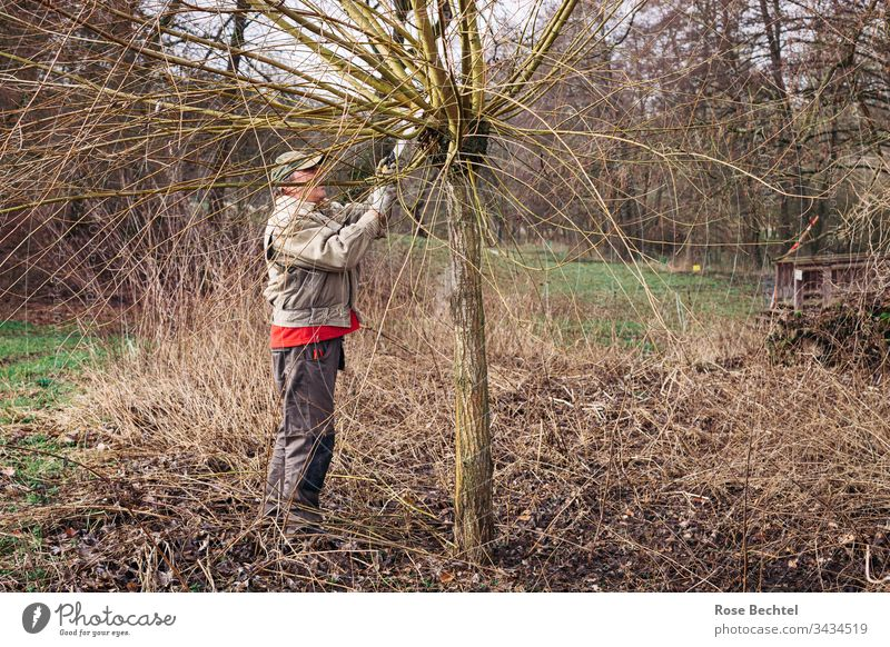 cut willows Nature Man Tree Willow tree pruning slicing Exterior shot Green Meadow Brown Rural conservation salix willow tree