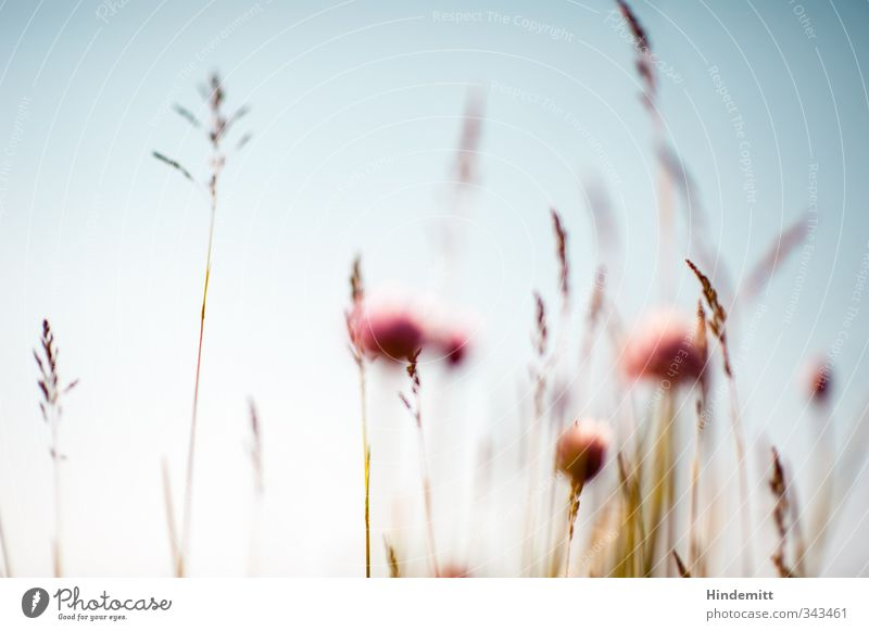 Sky Nature Blue Beautiful Summer Plant Calm Environment Warmth Grass Spring Blossom Brown Exceptional Wind Growth