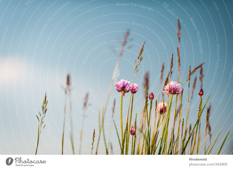 Sky Nature Blue Green Beautiful White Plant Flower Calm Clouds Leaf Environment Warmth Grass Spring Blossom