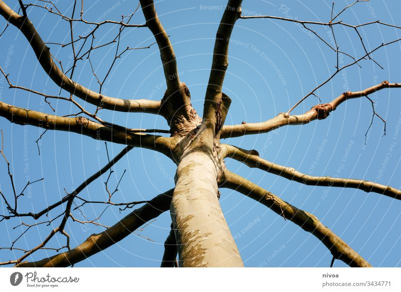 TREE CROWN Tree Tree trunk Branch Sky Nature Winter Treetop Landscape Tree bark Deciduous tree Branched Twig Plant Green Growth Spring Light Deserted