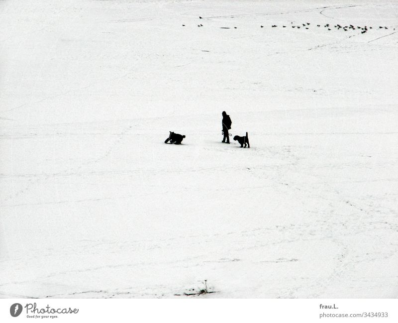 "The dogs didn't care that ""Alpha"" froze, the main thing was that they had fun in the snow and the pigeons were watching. Man Dog Black & white photo Pet"