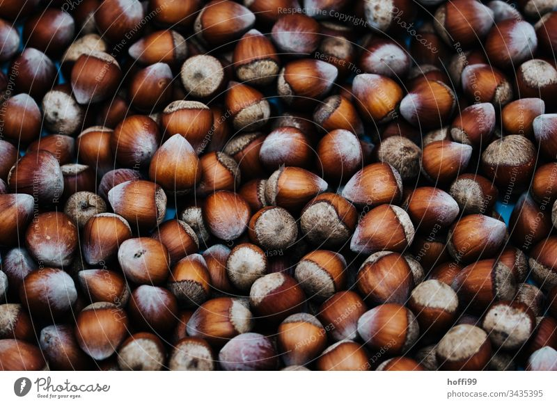 many hazelnuts very close Plate with hazelnuts Hazel brown Round pattern many nuts Detail of the hazelnut Wood Nut brown Husk Sheath Food Brown Nutrition