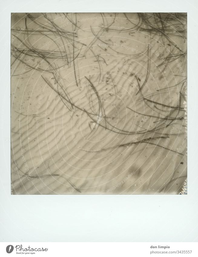 Seaweed in shallow water Water wave pattern structure Coast b/w photography flotsam Polaroid instant photo