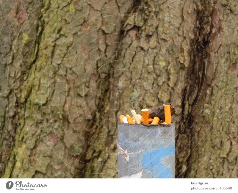 Full ashtray in front of a big tree trunk Cigarette Butt Ashtray out Tree trunk cigarette butt Smoking Nicotine Unhealthy Health hazard Dirty