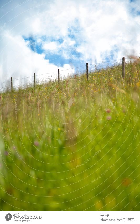uphill Environment Nature Landscape Sky Summer Beautiful weather Grass Meadow Field Natural Green Fence Colour photo Exterior shot Deserted Day