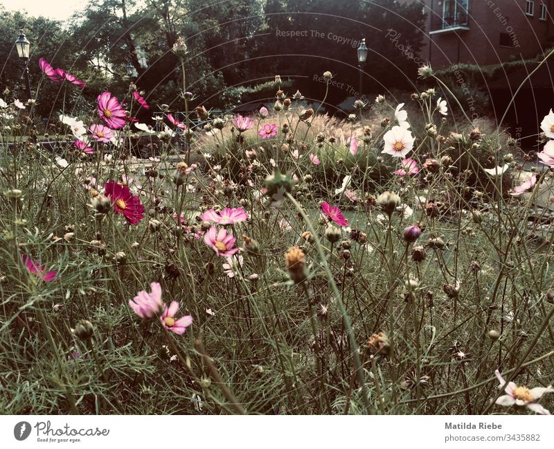 Late summer flower meadow Flower meadow Meadow Summer Nature Blossom Plant Green Exterior shot Grass Deserted Blossoming Growth Fragrance Meadow flower Leaf