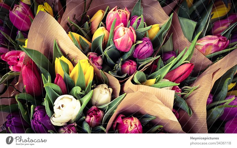 Spring tulips floral tulip bunch anniversary arrangement beautiful beauty bloom blossom botany bouquet celebration color field tulips flower freshness garden
