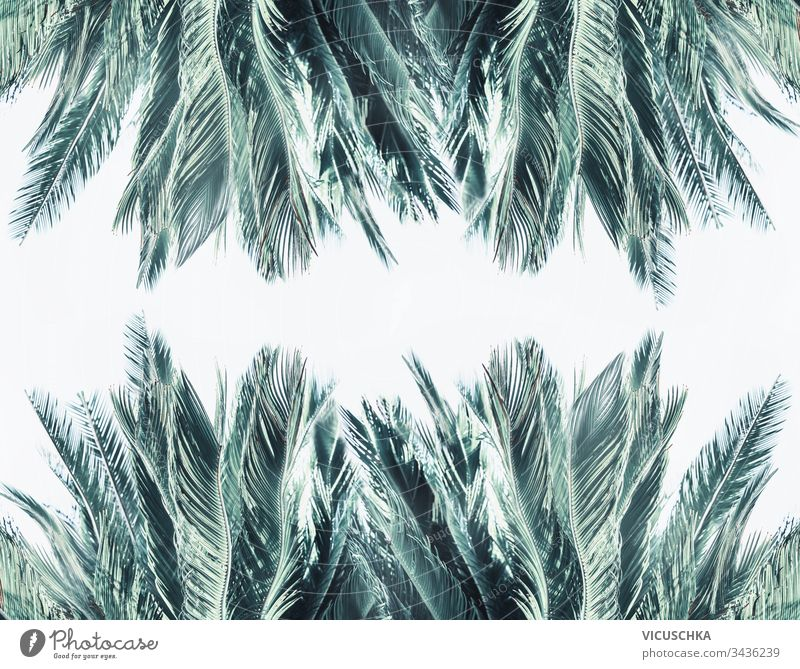 Palm leaves frame at white background palm texture pattern foliage rainforest jungle tropic vacation template flora botanical border art plant poster travel
