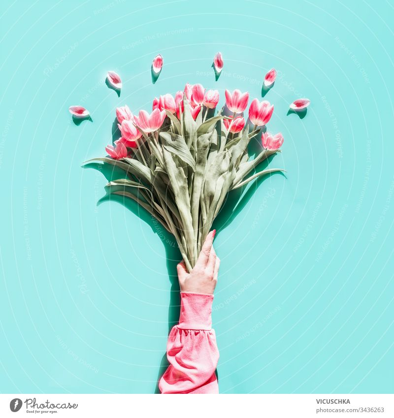 Female hand in pink blouse holding lovely tulips bunch on light turquoise background. Top view. Flat lay. Mothers day greeting female top view flat lay
