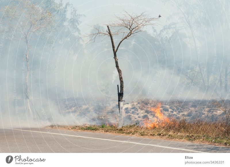 A fire at the roadside with a lot of smoke and a tree that almost catches fire Fire blaze Roadside Smoke Tree Blaze bush fire Dangerous Burn Hot Threat